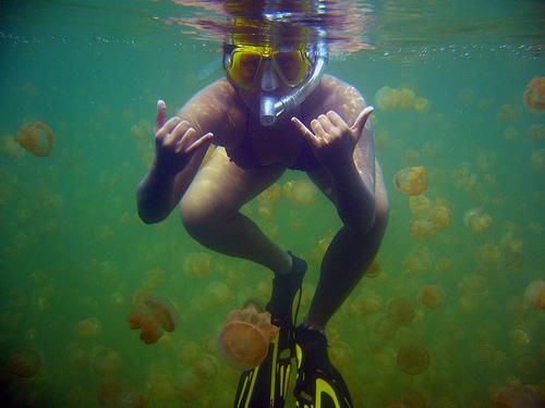 Jellyfish Lake in Palau photo