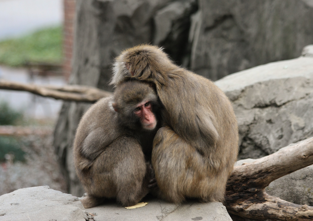 Central Park Zoo photo